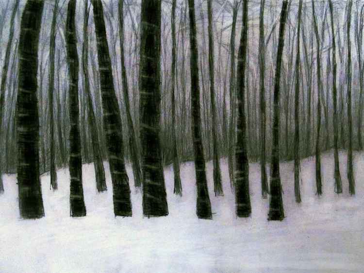 dark snow forest
