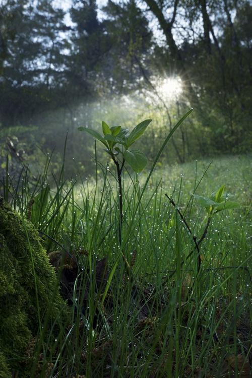 Morning sunbeam shine thru the green forest - Image 0