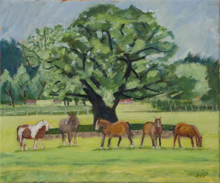 Five horses -