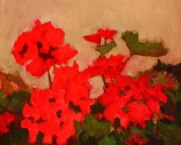 Red Geraniums -