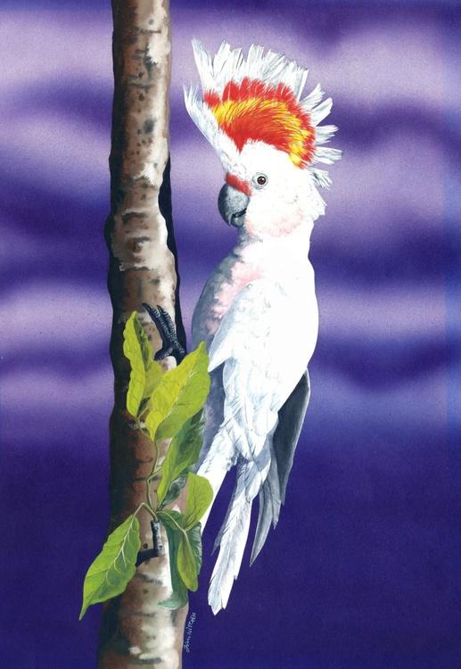 Leadbeaters Cockatoo - Image 0