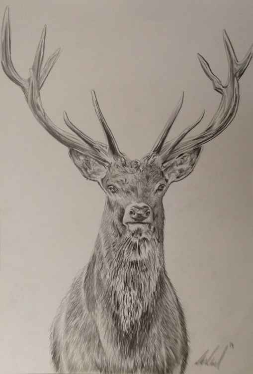 12 Pointed Deer -