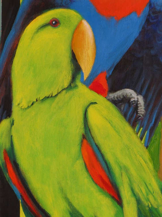 Eclectus parrots - Image 0