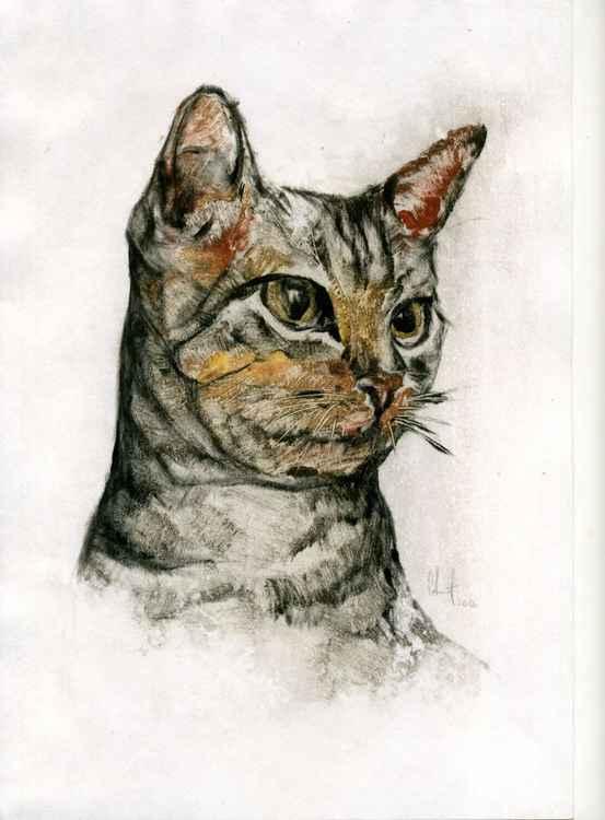 Cat_05 -