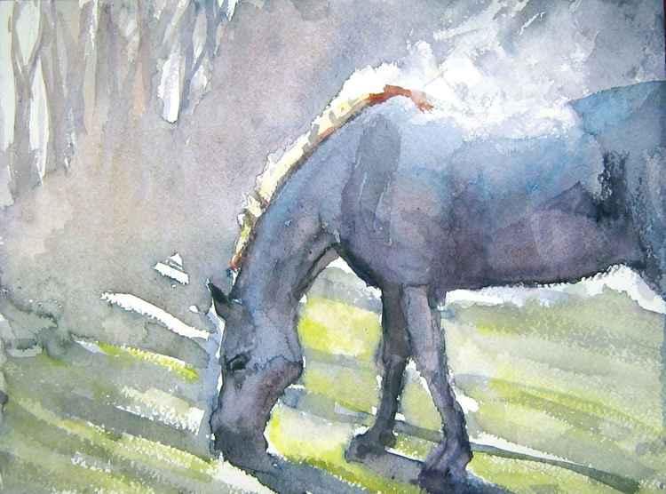 Horse steam -
