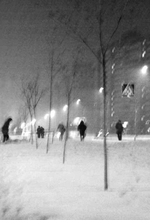 People, trees, winter