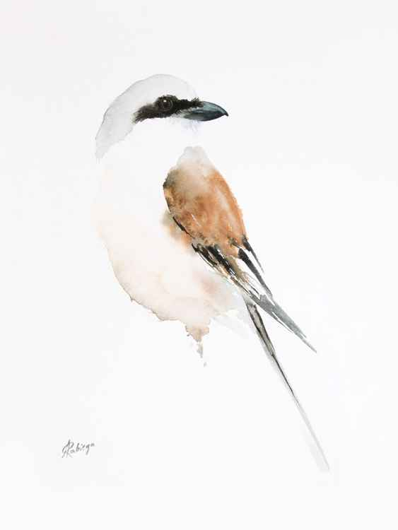 Red backed Shrike -