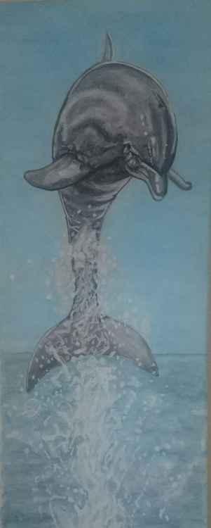 'splash'
