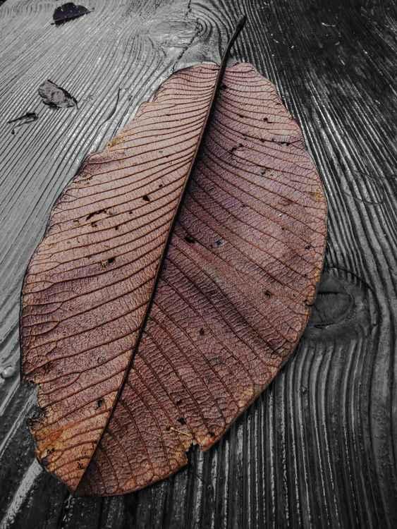 Magnolia Leaf