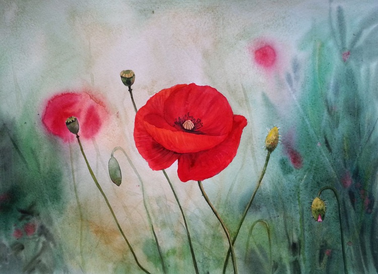 Red Poppies on Summer Meadow - Image 0
