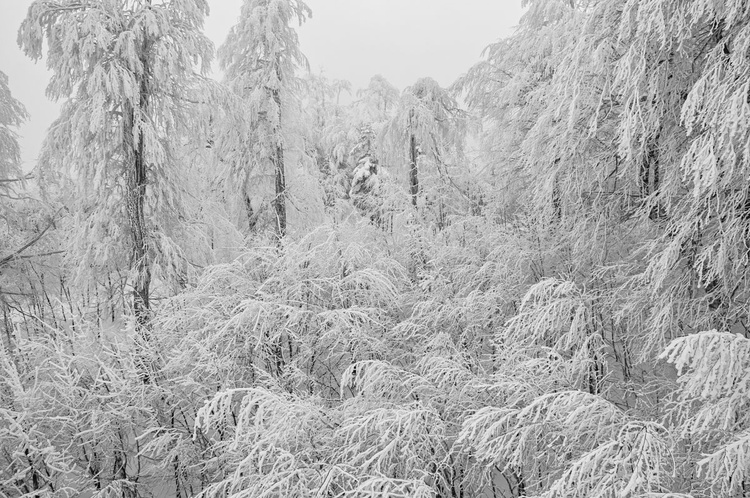 Snow | I (Limited Edition of 20 | Small) - Image 0