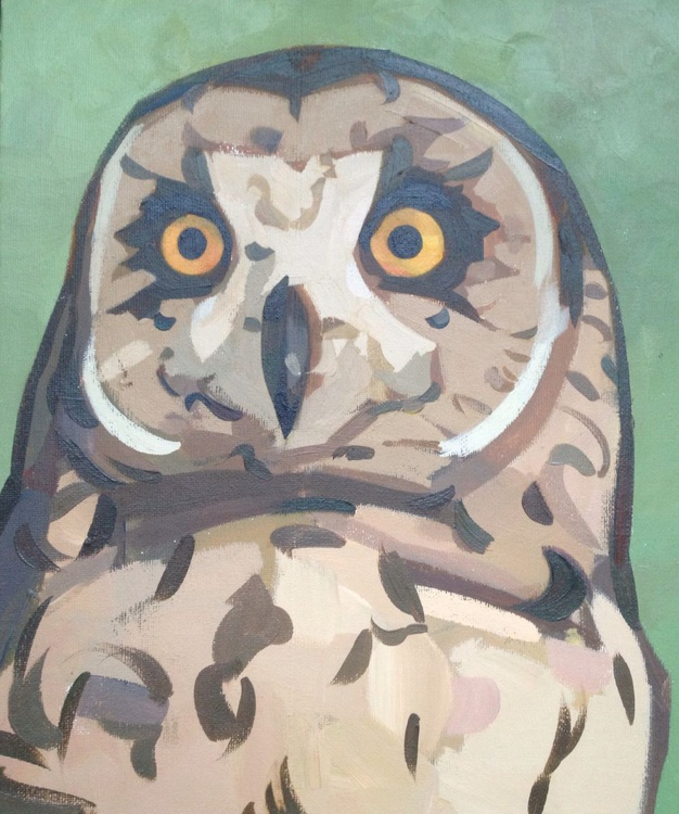 Owl on a green background - Image 0