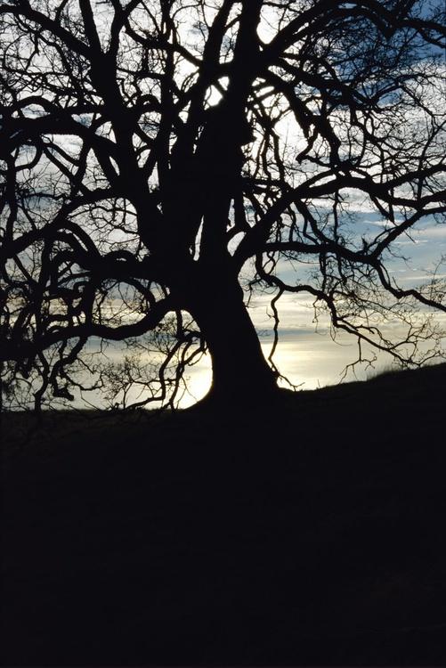 Tree #5 - Image 0