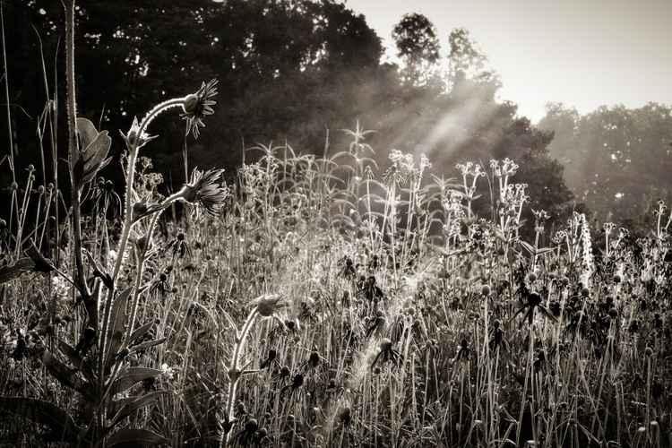 """""""Radiance of an Open Heart"""" - 11x14"""
