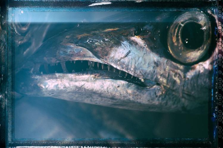 Fish Eye Lens - Image 0