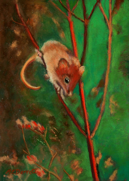 Field Mouse - Image 0