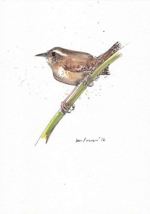 Jenny Wren - Daily Bird #44 - Image 0