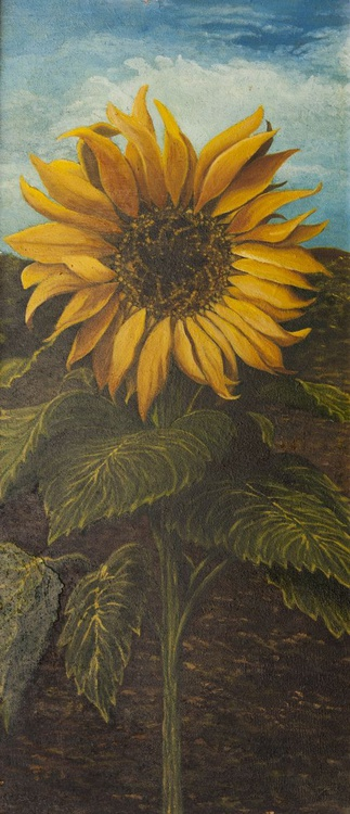 Sunflower with leaves - Girasole con foglie - Image 0