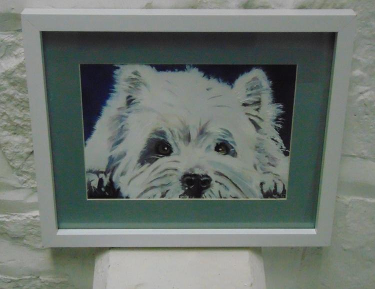 West Island Terrier (Westie) - Image 0