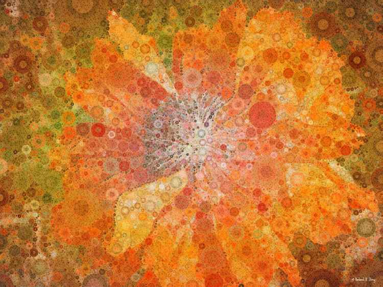 Flame Poppy, Percolated
