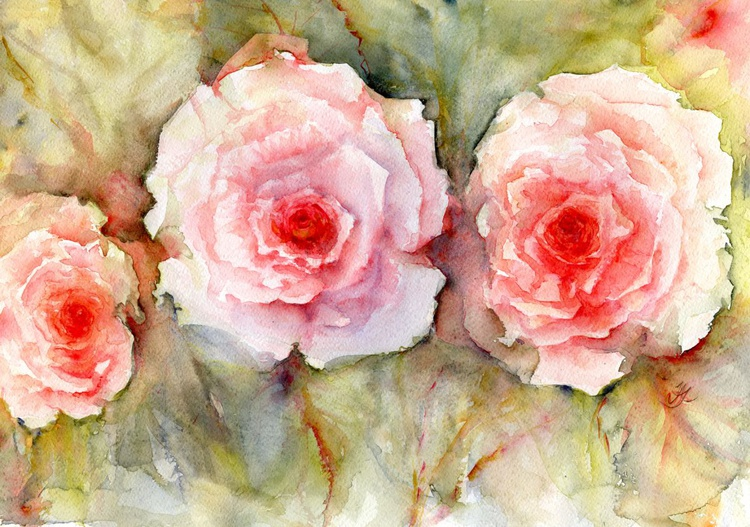 Roses, roses, roses . . . - Image 0