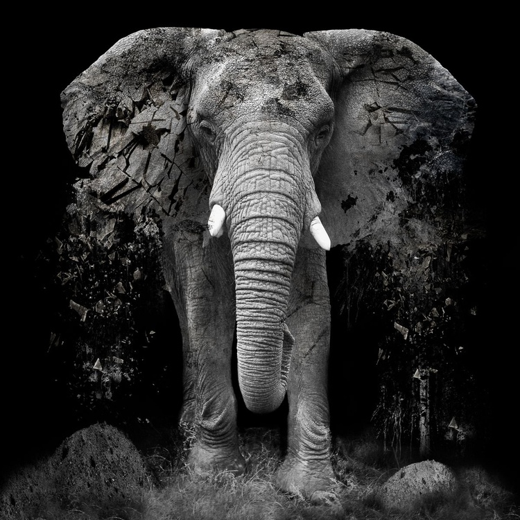 The Disappearance of the Elephant - Framed Giclée Print - Image 0