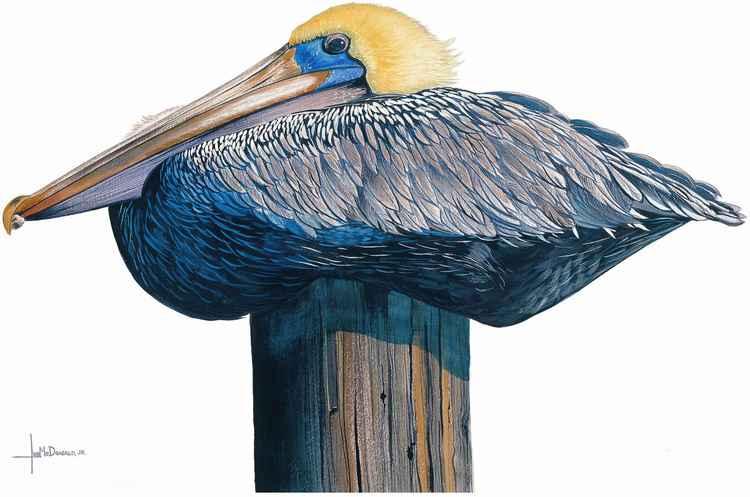 Pelican Perch -