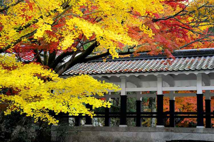Fall Foliage at Nanzenji Temple, Kyoto, Japan