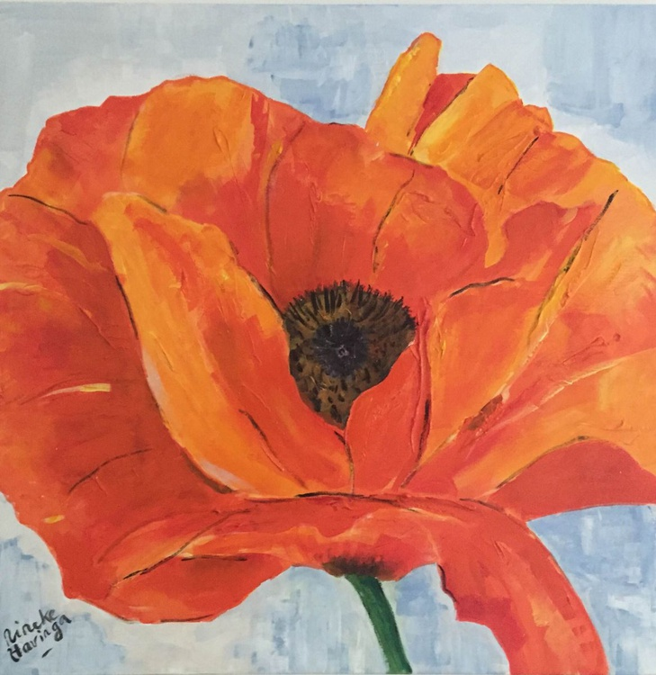 Orange poppy - Image 0