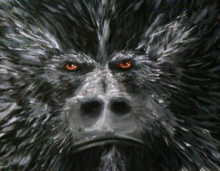 Gorilla Close-up - Image 0