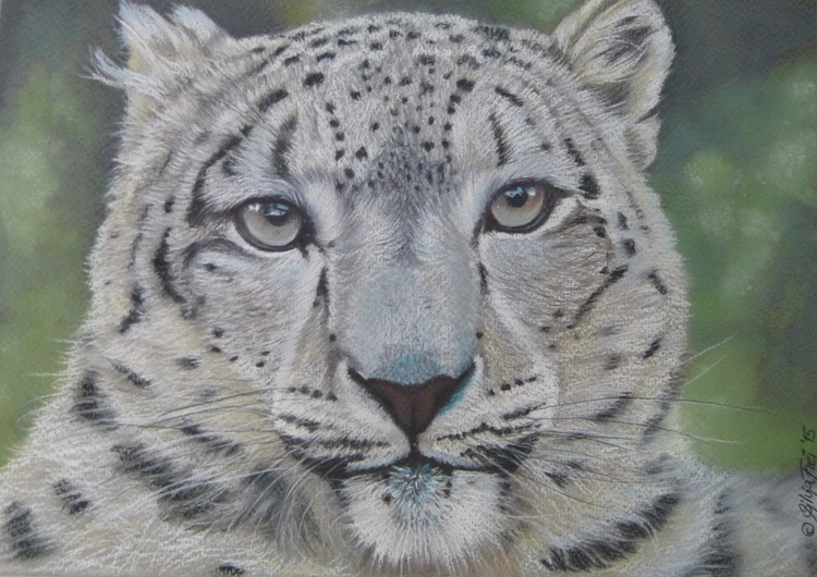 Snow Leopard - Image 0