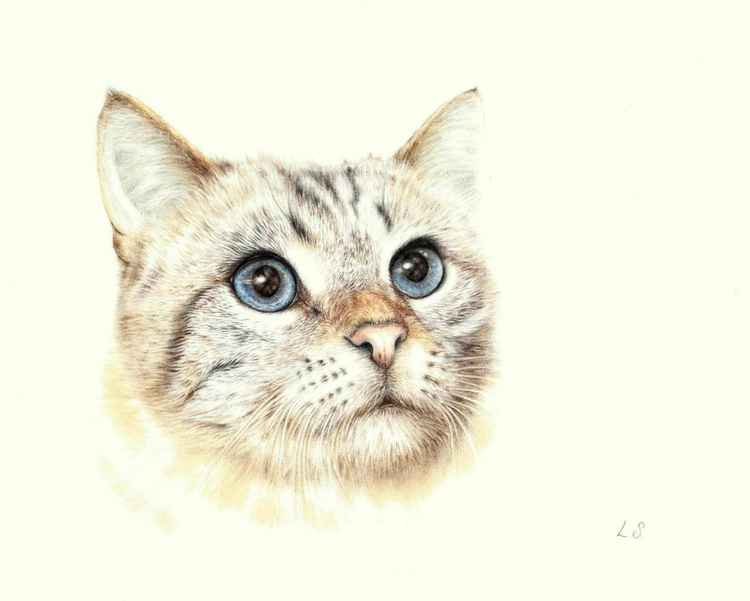 Original colored pencils drawing Cat -