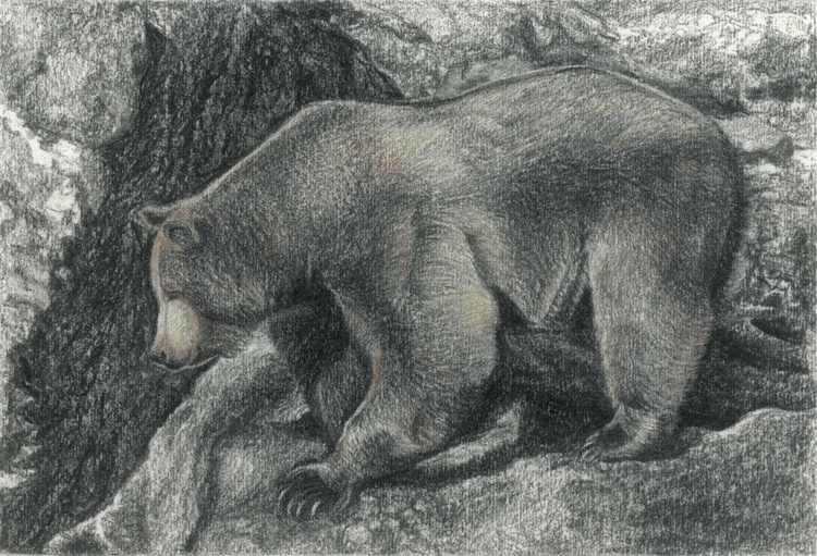 BROWN BEAR (based on the photo by Matej Vranič) - Image 0