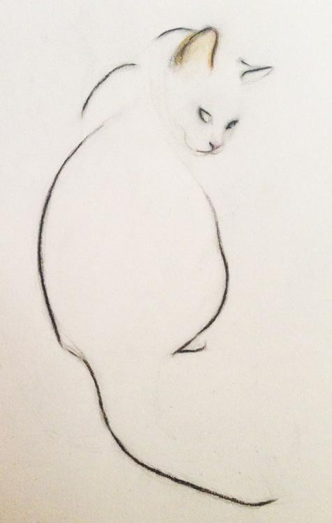 Cat Looking Over Her Shoulder - Image 0