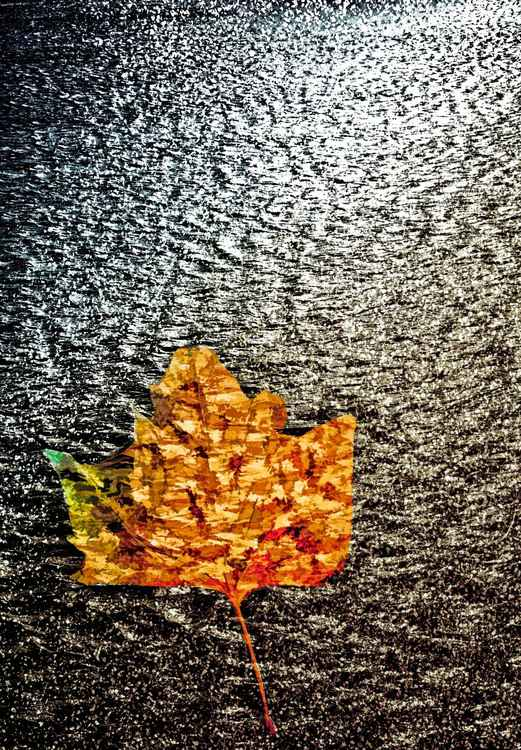 Dead Leaf on a Dark Tide -