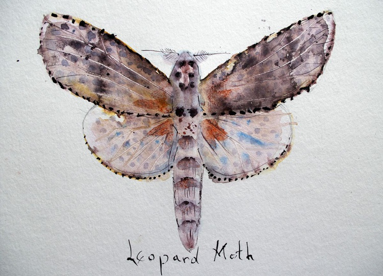 Leopard Moth (Zauzera Pyrina) - Image 0