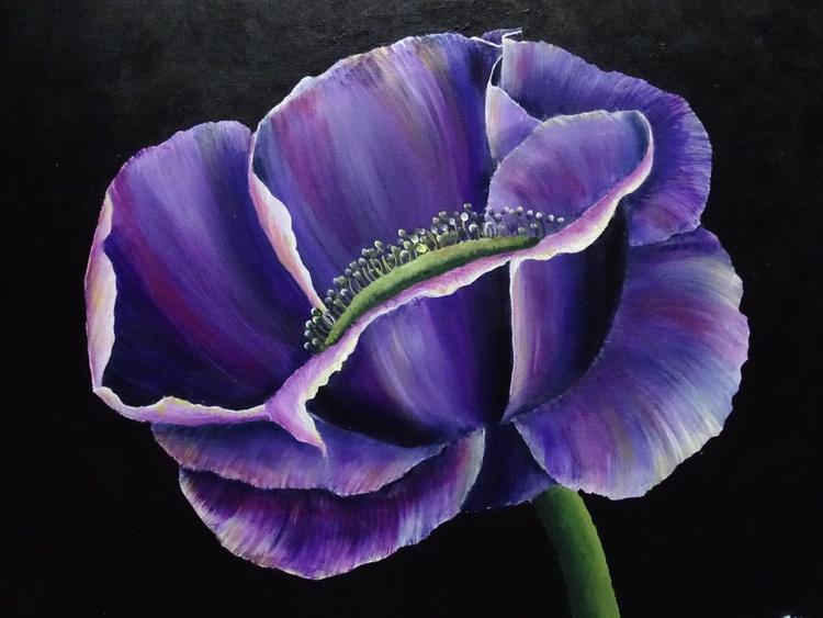 The Purple Poppy - Image 0