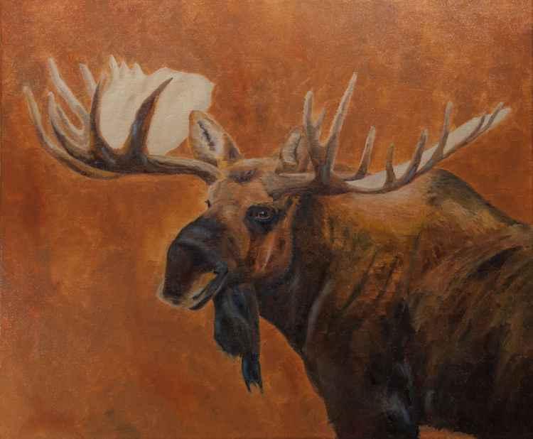 Denali Bull Moose