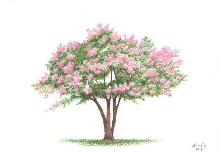 Crepe Myrtle Tree -