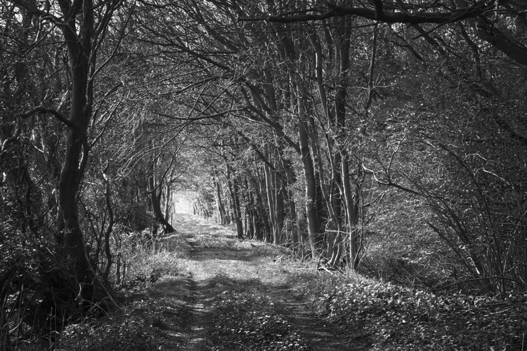 Sleepy Hollow (Ltd Edition of only 20 Fine Art Giclee Prints from an original photograph.) - Image 0