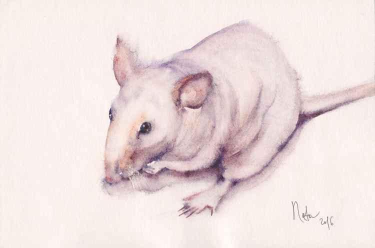 Rat Dexter