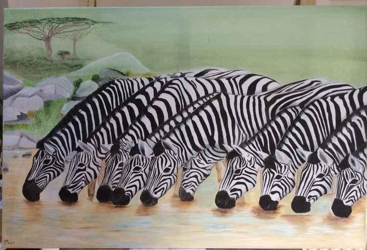 Zebra drinking -