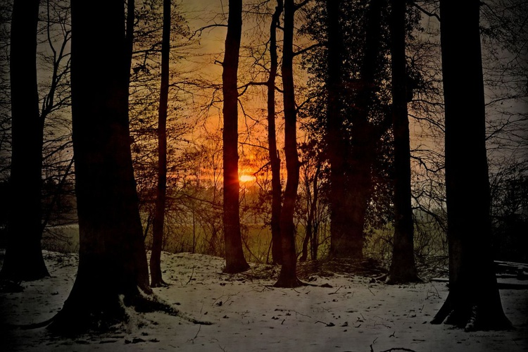 Sundown in Winter Forest - Canvas 75 x 50 cm - Image 0