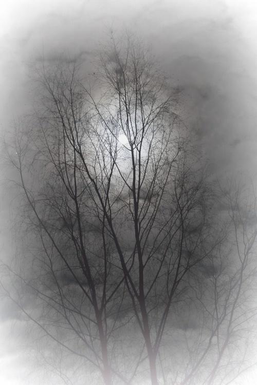 Winter night moon - Image 0