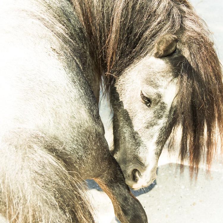 The Pony - Image 0