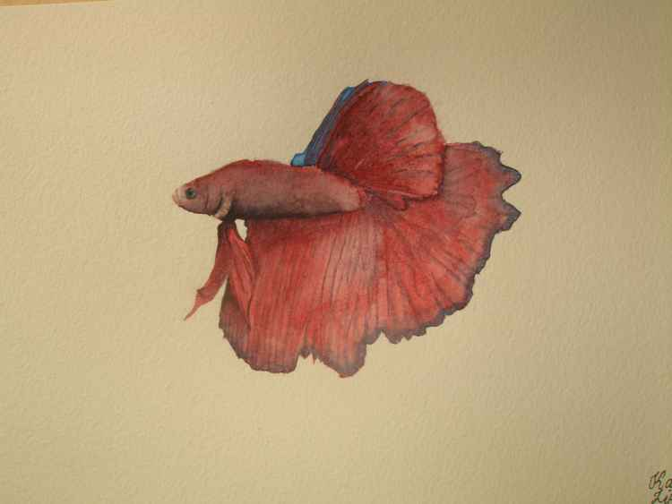 Siamese Fighting Fish Painting -