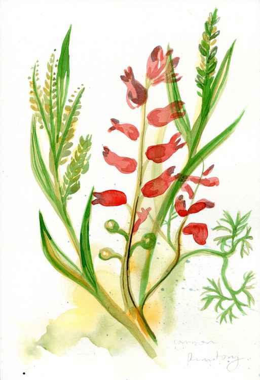 Original Watercolour Painting of British Wild Flower Common Furmitory
