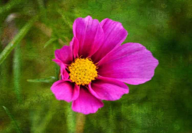 Cosmic Flower (Paper)