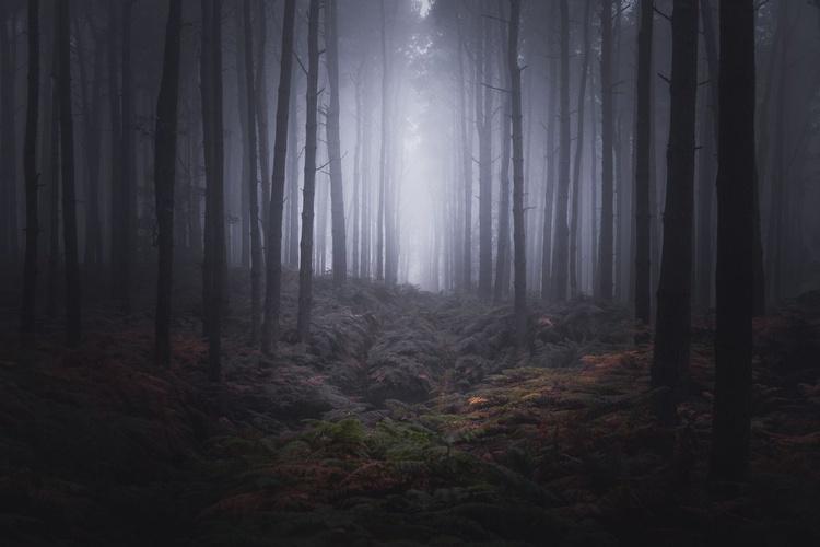 Fog of Wychwood - Image 0