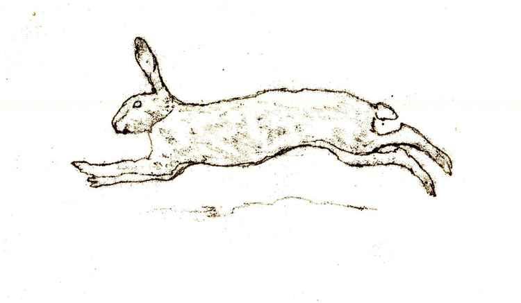 Running Hare -